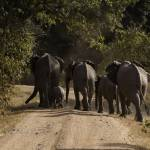 """Family Trip - Elephants-0692"" by PhotographyPerspectives"