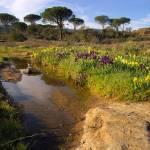 """""""Provence springtime landscape"""" by frenchlandscapes"""