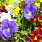 """Flowers_corrected"" by digitalmaverick"