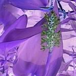 """Purpleflowernegative"" by CraftHippie"
