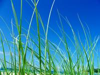 Seagrass & Blue Skies