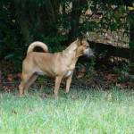"""""""Lucy in the Back Yard"""" by FamilyHero"""
