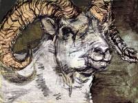 Dall Sheep Ram Charcoal by Ginette Callaway
