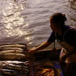 """Grilled Fish in Bangkok"" by impact"