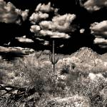 """""""#1 Saguaro"""" by Bradrey"""