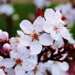 """Springtime"" by Bradrey"