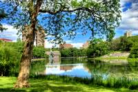 The Lone Tree and the Harlem Meer, NYC