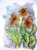 african daisy painting