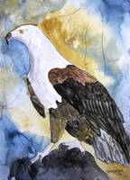 patriotic eagle bird art prints