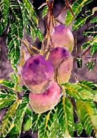 mango fruit tree painting