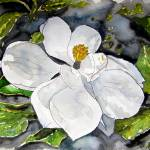 """magnolia flower painting"" by derekmccrea"