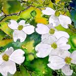 """dogwood tree flowers watercolor painting"" by derekmccrea"