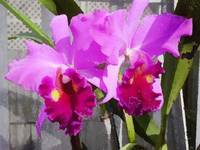 Babe's orchids 1