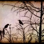 """""""Blackbird Silhouette"""" by MicheleShields"""