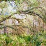 """Florida Woodland"" by MicheleShields"
