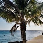 """""""Palm Buddies"""" by LeeMcFarlanePhotography"""