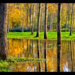 """Meadow Reflection"" by Christoph-Dudek"