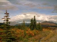 On the way into Denali National Park