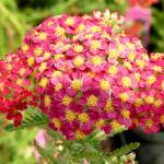 """tiny red cluster with bee"" by LoraxLady"