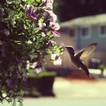 """Hummingbird"" by erinlarue"