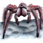 """Rose-Haired Tarantula"" by inkart"