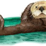 """Sea Otter"" by inkart"