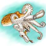 """Atlantic Octopus"" by inkart"