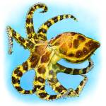 """Blue-Ringed Octopus"" by inkart"