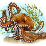 """Giant Pacific Octopus"" by inkart"