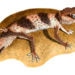 """Banded Knob-Tailed Gecko"" by inkart"