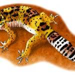 """""""Leopard Gecko"""" by inkart"""