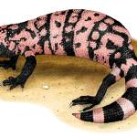 """Gila Monster"" by inkart"