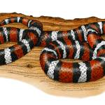 """Mountain Kingsnake"" by inkart"