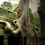 """Angkor Wat Temple Tree"" by MikeandAmy"
