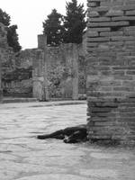Stray Dog of Pompeii