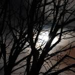 """""""moon light"""" by fransuess"""