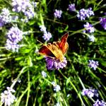 """""""Butterfly Effect"""" by MichaelChrimesPhotography"""