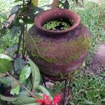 """baan twan pot"" by Shappell"