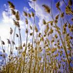 """Pampas Grass"" by EYECBEAUTY"
