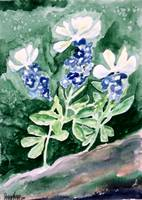 bluebonnet flower painting