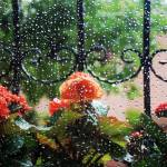 """Flowers In The Window On A Rainy Day"" by joshuaphotography"