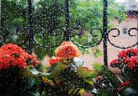 Flowers In The Window On A Rainy Day