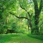 """""""Roseville plantation, Virginia"""" by ElleLee"""