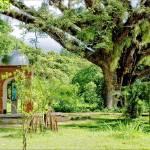 """""""Jardin botanico Venezuela"""" by riccardozullian"""
