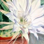 """Cactus Flower"" by BonArt"