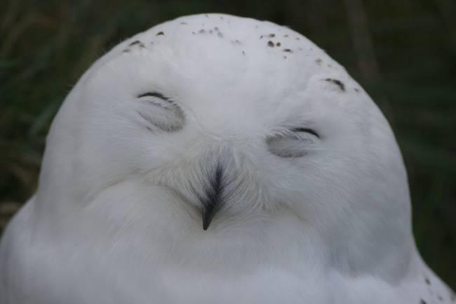 Cute baby white owl - photo#54