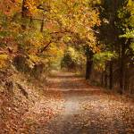 """fall road"" by lindseychase"
