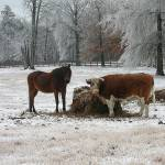 """Winter Wonderland Animals"" by lindseychase"