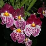 """Zebra orchids"" by TanzilaShams"