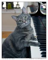Nora The Piano Cat - n0012